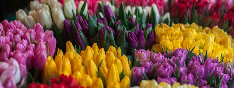Kjøp deg en enorm tulipanbukett. Alle de vakre fargene kommer til å gjøre deg lykkelig.